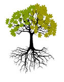 Two seasons - spring, summer. Art tree beautiful for your design. Vector illustration. Stock Photos