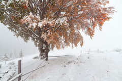 Two seasons - winter and autumn scene in the park Royalty Free Stock Image