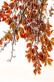 Two seasons - winter and autumn scene in the park Royalty Free Stock Photo