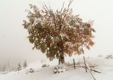 Two seasons - winter and autumn scene in the park Royalty Free Stock Photography
