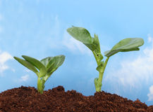 Two seedlings and sky Royalty Free Stock Photography