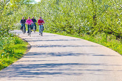 Two senior couples cycling through a Dutch blooming orchard Royalty Free Stock Photo