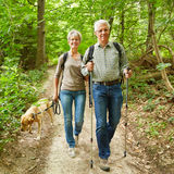 Two seniors walking with dog in forest. Two smiling seniors walking with their dog in a forest in summer Royalty Free Stock Image
