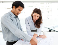 Two serious architects looking at blueprints Royalty Free Stock Image