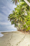 Two sets of footprints on a tropical palm fringed beach Stock Image