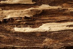 Two shaded wooden surface, textured and detailed. Old rough and weathered wooden surface in two shades close up, dirty, textured and detailed stock images