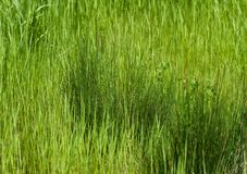 Two shades of  green in wild grass Royalty Free Stock Photos