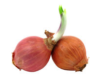Two shallots with one has leaf Royalty Free Stock Image