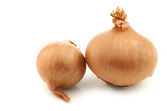 Two shallots Stock Photos