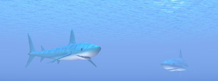 Two sharks - 3D render Royalty Free Stock Images