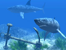 Two sharks in the Caribbean waters stock illustration
