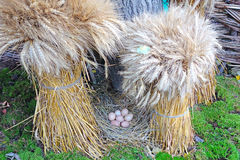 Two Sheaf and nest with eggs Stock Photography