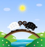 Two sheep. Landscape - sun, blue sky, river, bridge and two sheet Royalty Free Stock Photography