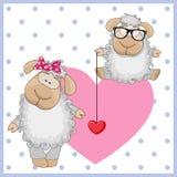 Two Sheep Stock Photos