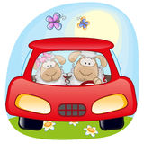 Two Sheep in a car Stock Photo