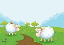 Two sheeps in the farm Royalty Free Stock Photo