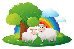 Two sheeps on the farm. Illustration Royalty Free Stock Images