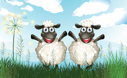 Two sheeps at the field Royalty Free Stock Photos