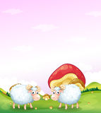 Two sheeps at the hill with mushrooms Royalty Free Stock Photography