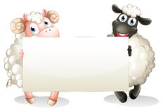 Two sheeps holding an empty banner. Illustration of the two sheeps holding an empty banner on a white background Royalty Free Stock Photography