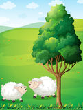 Two sheeps near the tree Royalty Free Stock Image