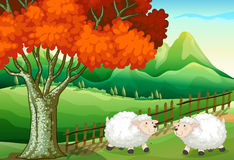 Two sheeps under the tree Royalty Free Stock Photo