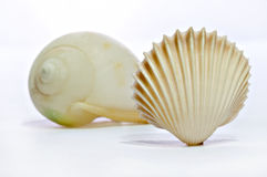 Two shell. (before, and latter) two different shell distinctions stock image