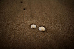 Two shells at the beach Royalty Free Stock Image