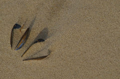 Two shells in form of heart on the beach Royalty Free Stock Photo