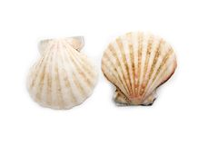 Two shells isolated Stock Photos