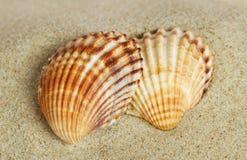 Two shells. Stock Image