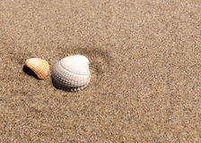 Two Shells in the Sand Royalty Free Stock Image