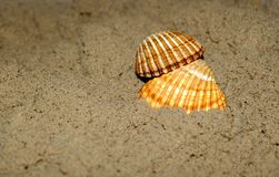 Two shells on sand. A couple of empty shells on sand Royalty Free Stock Image