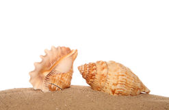 Two shells on sand Stock Photo