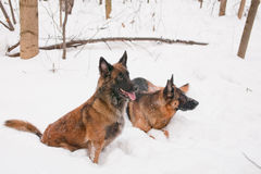 Two shepherds Stock Photos