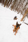 Two shepherds Stock Photos