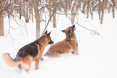 Two shepherds Stock Photography