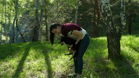 Girl and boy playing with dogs in the forest. Two Shiba dogs walk through the summer forest. Girl and boy playing with dogs in the forest stock footage