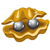 Two shiny black pearls in a gold box of shells Stock Photos