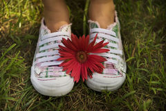 Two shoes and a Flower Stock Images