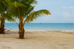 Two Short Palm Trees and Fishing Boat at the Beach Stock Photos