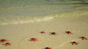 Two a shot in video. Beautiful sunny day. Tropical white sand with red starfish in clear water.the closeup if a Red stock video