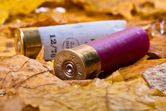 Two shotgun cartridges on fallen leaves Royalty Free Stock Image