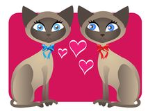 Two Siamese cat Valentines Stock Photo