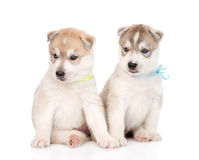Two Siberian Husky puppies sitting in front. isolated on white Stock Photos