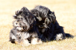 Two siblings dogs Stock Images