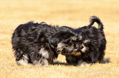 Two siblings dogs Royalty Free Stock Photos