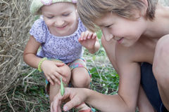 Two siblings playing with green praying mantis in summer field Stock Image
