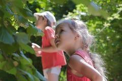 Two siblings playing hide-and-seek among common hazel bush hedgerow stock photos