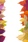Two side frame from motley autumn leaves Stock Images
